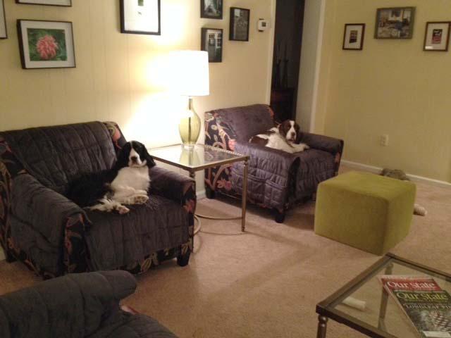 Nancy M's dogs enjoying deep velvet pile pet covers